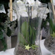 Vánoční orchidea