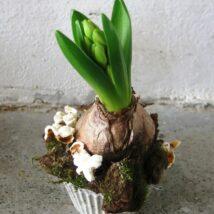 Hyacint - jarní aranžmá
